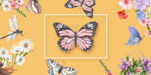 How To Use Butterfly Coloring Book